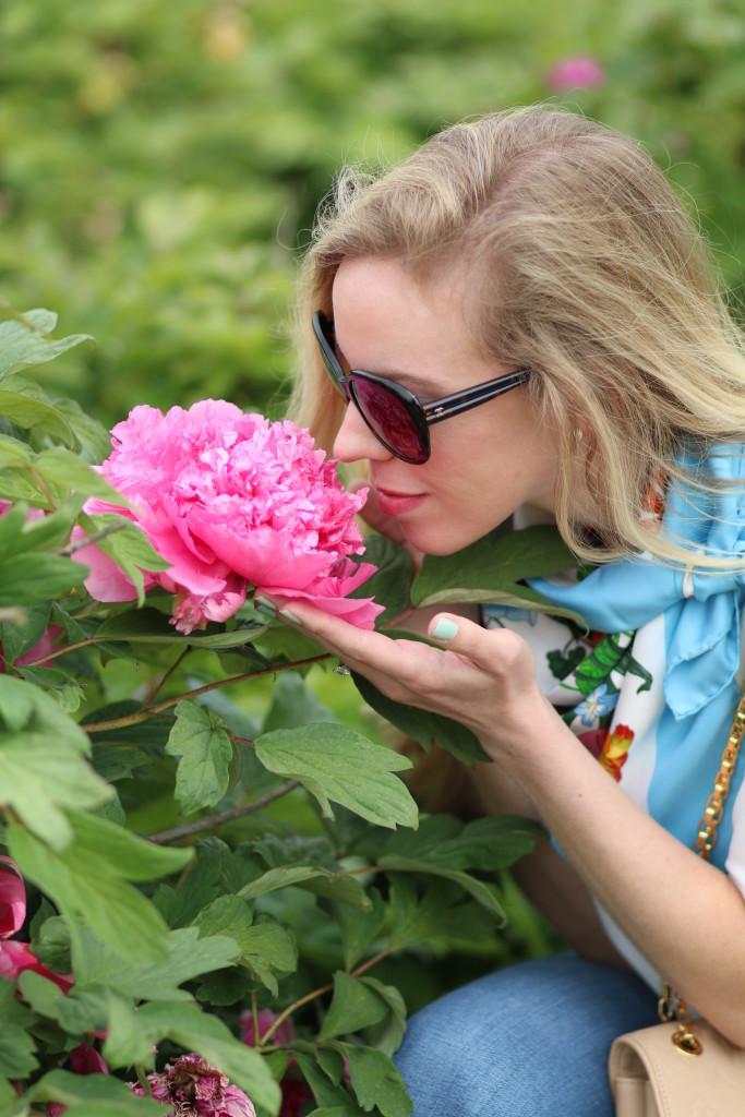 peony farm viterbo italy, moutan botanical center, pink peony  photography
