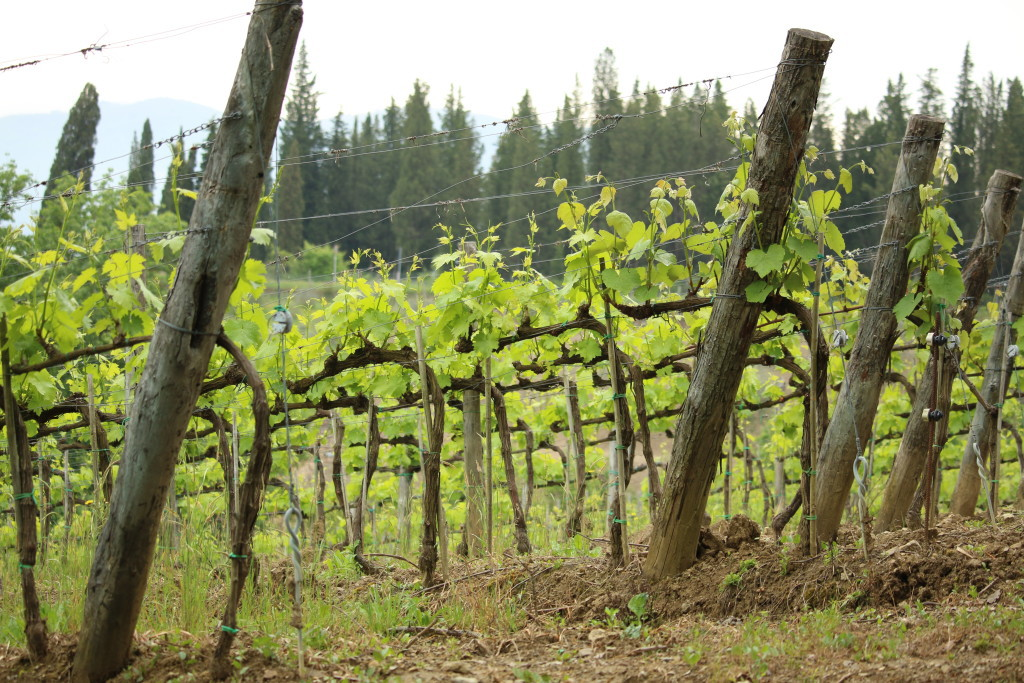 La Presura farm Tuscany Italy, greve di Chianti, vineyard, Tuscan wine, travel blog