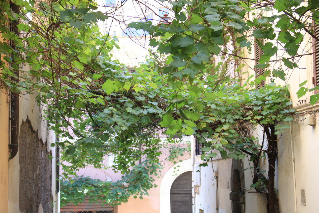 Italy, Roman streets, vines growing on building in Rome, travel blog