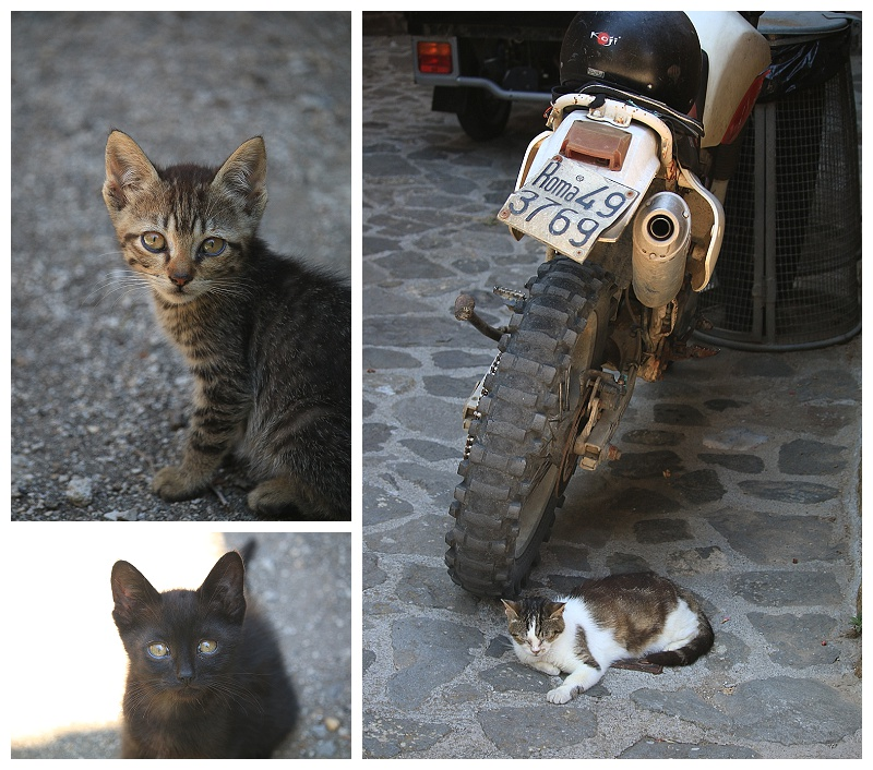 cats of Italy, photography, travel blog, Civita di Bagnoregio, best day trips from Rome