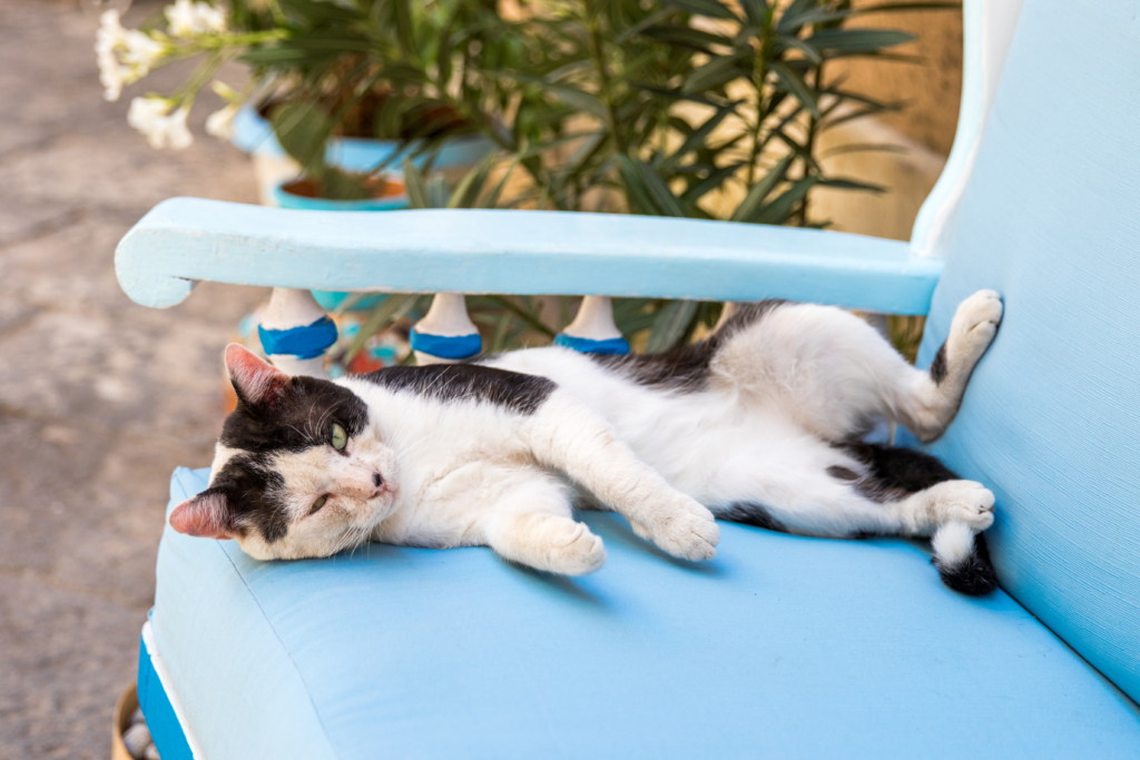cats of Italy, Siracusa Sicily, travel blogger