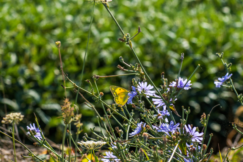 butterfly nature photography, Shenandoah County Virginia blogger