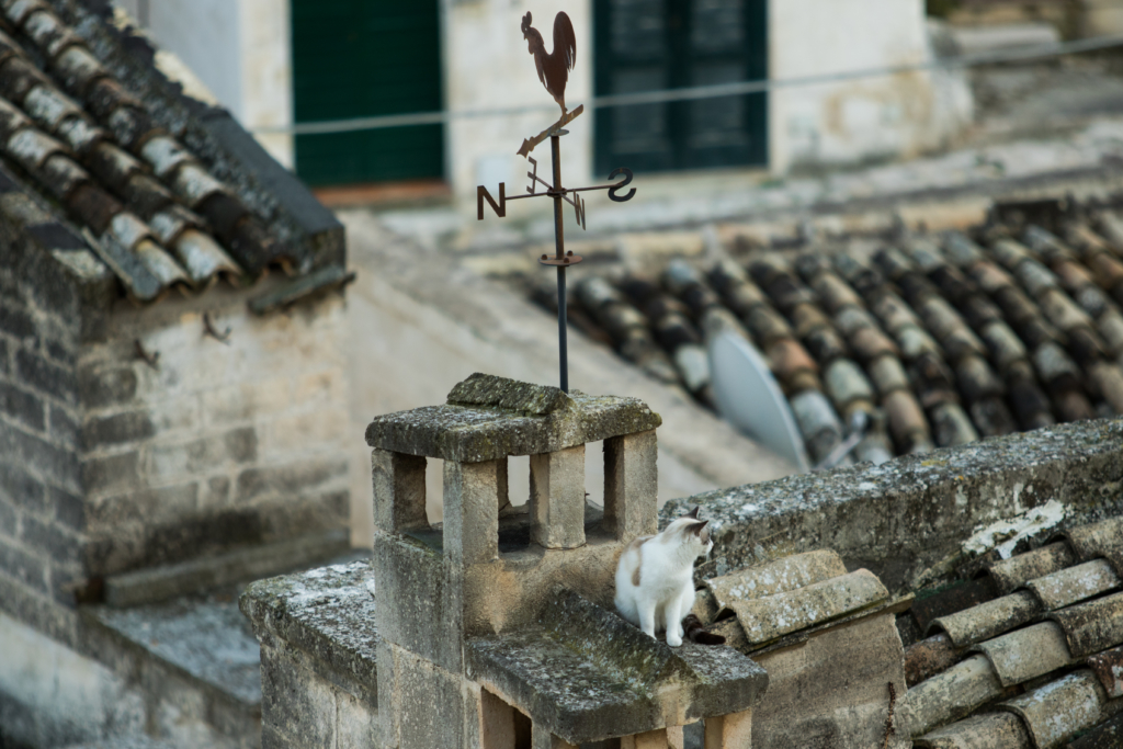 cats-of-italy-matera-italy-travel-blogger