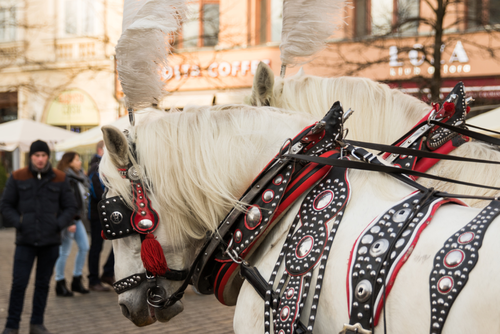 christmas-carriage-ride-krakow-poland-things-to-do-during-christmas-in-poland